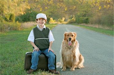 how does divorce affect children, boy and dog