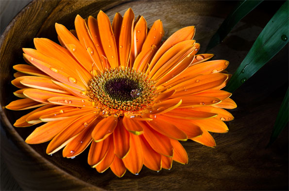 Personality Color Orange