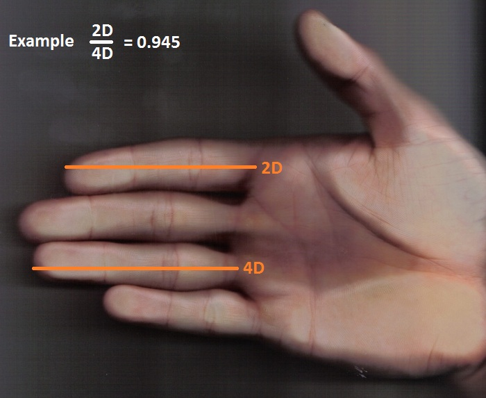 hand 2d and 4d digit ratio test